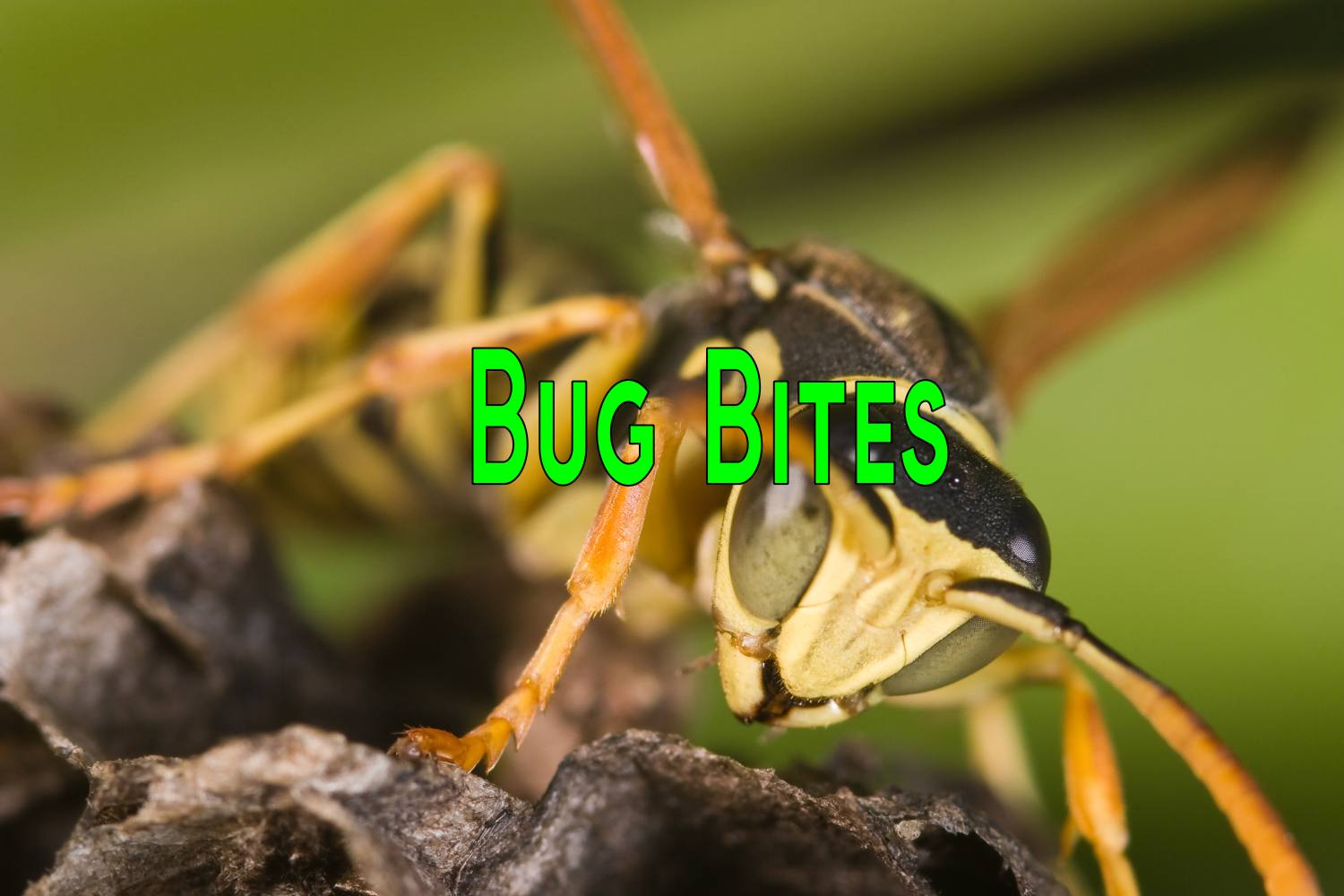 10 Home Remedies for Bug bites